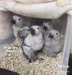 Funny Birds, Cute Birds, Cute Funny Animals, Cute Baby Animals, Animals And Pets, Beautiful Birds, Animals Beautiful, African Grey Parrot, Bird Illustration