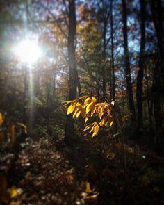 #WonderWatch 2015-146 Light Shine #BeTheLight #paris #hope #beauty #light #UpperDelawareRiverRegion #trees #PA #autumn #fall #GlimpsesOfFall #inspire #impermanence #LookUp #nature #naturephotography #Ponder #Pennsylvania #yellow #zen #love