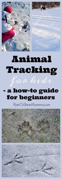 Animal Tracking with Children: A Beginner's Guide. Wildlife tracking is one of our favorite outdoor activities for kids in the winter! These tips and ideas will help you get started. Rain or Shine Mamma Forest School Activities, Nature Activities, Science Activities, Educational Activities, Motor Activities, Family Activities, Outdoor Education, Outdoor Learning, Early Education