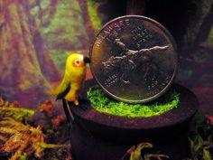 1:12 Scale Dollhouse Miniature Sun Conure by June Girardi
