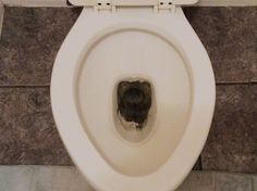 Learn how to remove stains from the toilet bowl.                              …