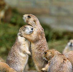 90 best groundhog s day images on pinterest hilarious cute funny