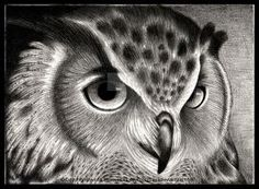 Owl by LadyFromEast