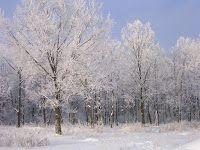 InScribe Writers Online: Thankful In Season - Tracy Krauss