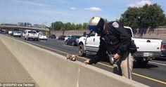 Rescatan a un perro chihuahua en medio de una transitada autopista. A uno de los oficiales motorizados se le ocurrió subir a @Twitter Inc. la foto del rescate, de inmediato cientos de personas llamaron para adoptarla. Los dueños de Charm alcanzaron a enterarse del rescate y acudieron en su búsqueda.