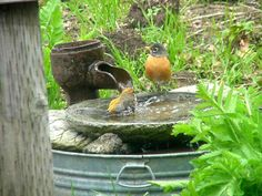 Need birdbath advice!!
