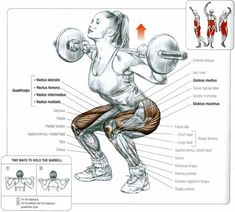 #Muscles involved in the #BackSquat. The lower back and upper back muscles (spinal erectors, rhomboids, trapezius) are active as well during a back #squat.