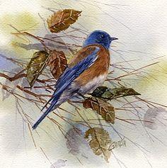 Western Bluebird by Joe Garcia Watercolor ~ 6.5 x 6.5