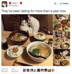 Large cat dump