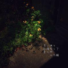 老い独り 記憶探して 夏の街[山乃鯨] #haiku #photohaiku #poetry #summer #micropoetry #夏 #フォト俳句 #japanese #写真俳句 #snapseed #fontstudio #jhaiku