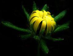 Gene Youth (fleur)