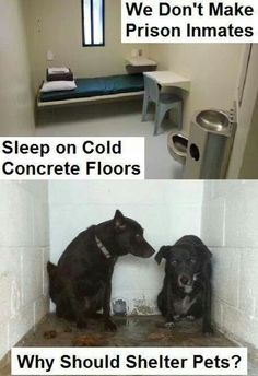 Agreed/ It's despicable they sleep on cold hard concrete floor's.In there own mess's, never walked,why because they know they are going to kill them anyway.?