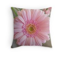 'Pink Gerbera' Throw Pillow by ellenhenry Throw Pillows Bed, Bed Throws, Decorative Throw Pillows, Floor Pillows, Pink Gerbera, Pink Carnations, Floral Photography, Bunch Of Flowers, Canvas Prints