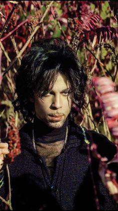 Prince ● the Beautiful One