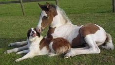 So perfect :) man's best friend, foal's best friend. same thing :)