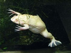 albino!