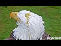 SWFL Eagles ~ M's Perfect Aim ~ PS On Harriet's Head 10.17.17 - YouTube