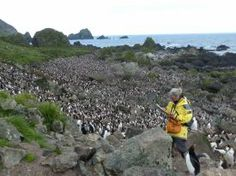 Penguin Scientist, Macquarie Island