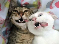 Cats taking selfies Cute Baby Cats, Silly Cats, Cute Kittens, Cute Funny Animals, Cats And Kittens, Funny Cats, Best Cat Gifs, Cat Tatto, Cat Icon