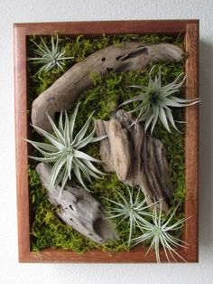 Tillandsia Living Wall Art