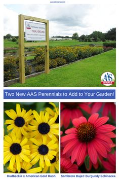 For easy beautiful flowers grow the first-ever All-America Selections (AAS) winners perennials Echinacea Sombrero Baja Burgundy & Rudbeckia x American Gold Rush Best Perennials, Herbaceous Perennials, Gardening For Beginners, Gardening Tips, Kitchen Gardening, Beautiful Gardens, Beautiful Flowers, Garden Online, Garden Pictures