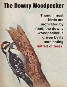 Bonus: For extra giggles, read this in David Attenborough's voice.