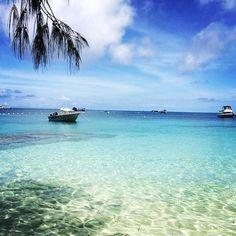 The Great Barrier Reef //  #holidays #vacation #queensland #australia #fitzroyisland #island #greatbarrierreef #pinacolada #summer #summer #salty #cairns #australia #beachview #beautiful #ocean by itsmorganmichelle http://ift.tt/1UokkV2