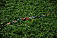 YannArthusBertrand2.org - Fond d écran gratuit à télécharger || Download free wallpaper - Barques prises dans les jacinthes d'eau sur le Nil, Égypte (29'43' N - 31'15' E).