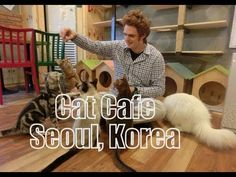 Cat Cafe in Hongdae - Seoul, Korea (고양이 다락방) Kitty Café: Feeding & playing with cats