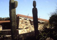 Cacti at Taliesin West in Scottsdale, AZ  franklloydwright.org