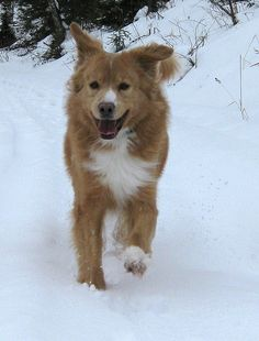 Running in the snow #dogs