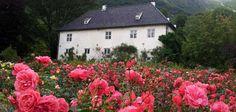 Baroniet Rosendals rosehage: en renessansehage med et vell av roser Growing Strong, Garden Inspiration, Norway, Floral Wreath, Europe, Plants, Villas, Bucket, Villa