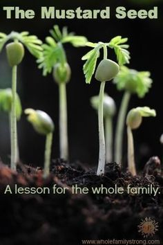 """Teaching our children about faith is important to build a strong foundation in Christ. In 2014 our family started reading the New Testament together. After reading Matthew, I decided to get elbow deep in mustard. This lesson explains faith the size of a mustard seed. Dictionary.com defines faith as, """"confidence or trust in a person …"""