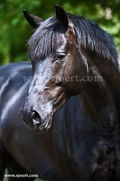 Portrait - Amoor - Sjoert.com