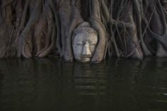 one of most famous Buddha figures in Asia...under water(Ayutthaya)