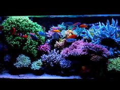 Krzysztof Tryc's reef tank  - system with NP-reducing BioPellets