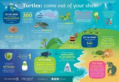 Happy World Turtle Day!
