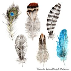 This set of watercolor feathers clipart is inspired by nature. Perfect for wedding invitations and home decor. These fun feathers look best on light backgrounds, but can also be used on dark.  This set includes 12 hand painted, and professionally digitized PNG clipart feathers, in my Natural color theme.   Incredibly useful for logo design, wall art, wedding invitations, wedding crafts, scrap booking, custom invitations, teaching resources, greeting cards, stickers, t-shirts, wall art…