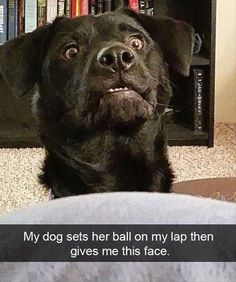 Funny Animal Picdump of the Day 175 photos) - Funny Dogs - Dog Memes Funny Dog Memes, Funny Animal Memes, Funny Cat Videos, Cute Funny Animals, Cute Baby Animals, Funny Cute, Funny Dogs, Hilarious, Funny Kitties