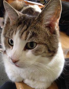 Boo Cat | Pawshake Nottingham