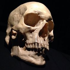 Well, we all know this one. Skeleton Bones, Human Skeleton, Human Skull, Skull And Bones, Human Human, Skull Reference, Anatomy Reference, Skull Anatomy, Totenkopf Tattoos