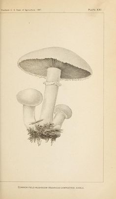 no.15 - Some edible and poisonous Fungi. - Biodiversity Heritage Library