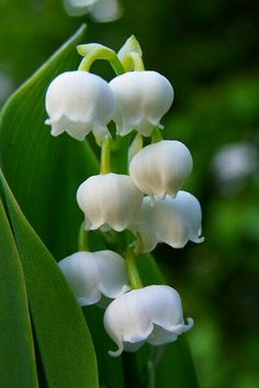 fine 10 Best Fragrant Flowers to Scent Your Spring Garden Amazing Flowers, White Flowers, Beautiful Flowers, White Lilies, Love Lily, White Gardens, Flower Pictures, Spring Garden, Trees To Plant
