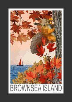 Red Squirrel at Brownsea Island (Art Print)