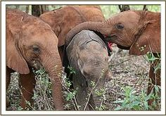 Kainuk receives a warm welcome from the orphans, Tano (right), Makireti (left)