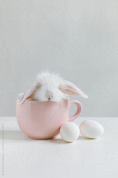 Stocksy United – Royalty-Free Stock Photos – Little white rabbit in a mug by Duet Postscriptum