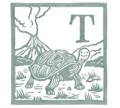 T  Tortoise. Andrew Wightman