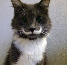 Animals with moustaches