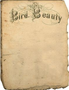 "Free vintage printable ""Bird Beauty"".  → For more, please visit me at: www.facebook.com/jolly.ollie.77"