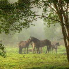 Horses in the medow